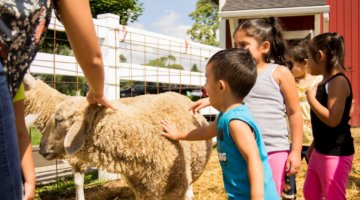 Take A Trip Downriver To Taylor's Heritage Park Petting Farm This Spring