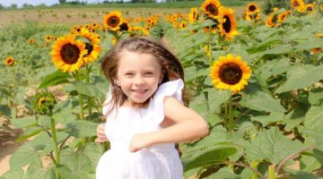 Sunflower Farms And Festivals To Visit In Metro Detroit